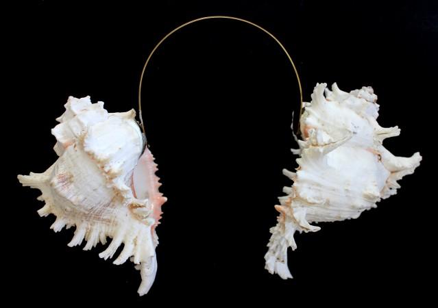 Conches. Sardinia. 20 x 30 cm. Brass